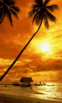 Amazing of Sunset Pictures HD Wallpaper screenshot 1/6