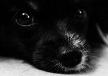 Attractive Cute Dog wallpaper screenshot 1/6