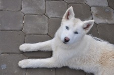 Attractive Cute Dog wallpaper screenshot 4/6