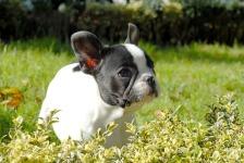 Attractive Cute Dog wallpaper screenshot 5/6