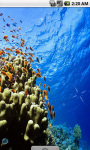 Cool Underwater Scenery Live Wallpaper screenshot 3/4