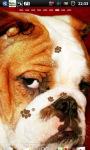 Bulldogs Live Wallpaper screenshot 1/6
