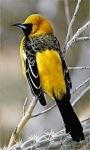 Birds LWP2 screenshot 1/3