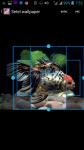 Fish Background HD Wallpaper screenshot 3/4