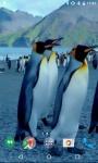 Penguins HD Video Live Wallpaper screenshot 1/4