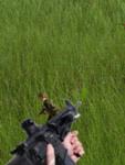 PlatoonLive screenshot 1/2