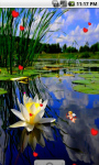 Water Lily Lotus Live Wallpaper screenshot 1/4