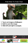 Free How to Train Your Dragon 2 Wallpaper screenshot 4/5