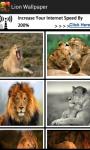 Free Wild Lion Wallpaper screenshot 1/2