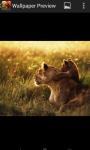 Free Wild Lion Wallpaper screenshot 2/2