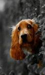 Doggy Live Wallpaper screenshot 1/3