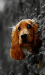 Doggy Live Wallpaper screenshot 2/3
