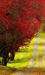Red Foliage Trees Road Live Wallpaper screenshot 2/4