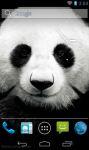 Cute Panda Wallpaper screenshot 1/3