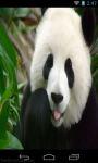 Cute Panda Wallpaper screenshot 3/3