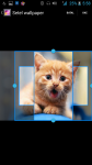 Pictures Of Cats screenshot 3/4