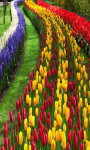 Flower Garden Live Wallpaper Free screenshot 2/4