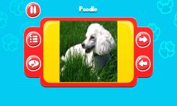 Dog Breeds Great Quiz screenshot 3/6