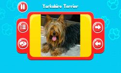Dog Breeds Great Quiz screenshot 4/6