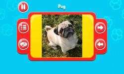 Dog Breeds Great Quiz screenshot 5/6