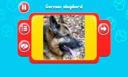 Dog Breeds Great Quiz screenshot 6/6