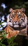 Tiger On Wood Live Wallpaper screenshot 2/3