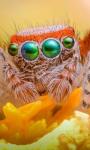 Orange Flower Spider Live Wallpaper screenshot 1/4