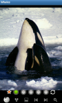 Whales : Ocean Wild Animals screenshot 1/6