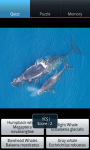Whales : Ocean Wild Animals screenshot 2/6