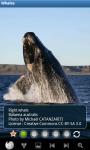 Whales : Ocean Wild Animals screenshot 6/6