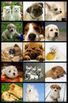 Cute puppies Wallpapers app  screenshot 1/2