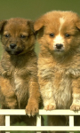 Cute puppies Wallpapers app  screenshot 2/2