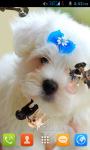 Dog Puppies Live Wallpaper screenshot 1/4
