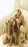 Dog Puppies Live Wallpaper screenshot 2/4