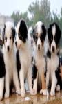 Dog Puppies Live Wallpaper screenshot 3/4