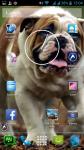 Dog Images Download screenshot 6/6