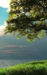 Nature Wallpapers HD Frees screenshot 1/2