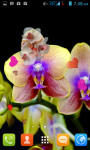 Orchid Flower Live Wallpaper Free screenshot 1/4