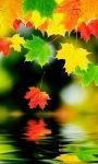 Colorful Leaf Live Wallpaper screenshot 1/3