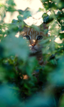 Cat Spy Live Wallpaper screenshot 1/3