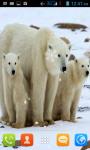 Polar Bear Live Wallpaper Free screenshot 1/4