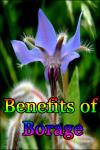 Benefits of Borage screenshot 1/3