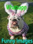 Whatsapp Funny Images screenshot 1/3