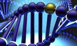 DNA matching wallpapers screenshot 1/1