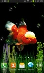 GOLDFISH UNDERWATER LWP screenshot 2/4