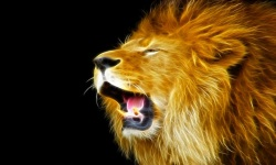 Amazing Lion HD Wallpaper screenshot 2/6