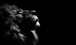 Amazing Lion HD Wallpaper screenshot 3/6
