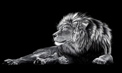 Amazing Lion HD Wallpaper screenshot 4/6