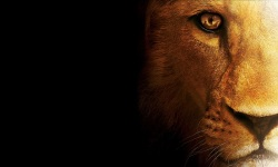 Amazing Lion HD Wallpaper screenshot 6/6