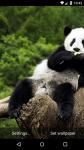 Beautiful Panda Live Wallpaper HD screenshot 3/6